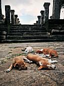 Puppies resting in front of temple ruin, cultural triangle, Gal Vihara, Polonnaruwa, Sri Lanka