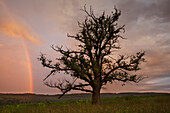Oak, rainbow with thunderclouds, Solling, Lower Saxony, Germany
