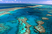 Hardy Reef, Great Barrier Reef, nature, helicopter, Queensland, Australia, flight, Whitsunday Islands, reef, from above, flight, fly, swim, Shute Harbour, coral reef, islands, island world, sea, turquoise, clear, vacation, rest, holidays, excursion, day t