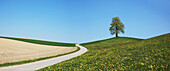 Beauty, Bern, Calm, Clear, Sky, Copy Space, Country Road, Day, Emmental, Field, Grass, Hill, Horizon, Panorama, Idyllic, Meadow, Outdoor, Peaceful, Peacefulness, Quiet, Quietness, Rural, Scenic Simplicity, Switzerland, Bern, Tranquil, Tranquillity, Tree,.
