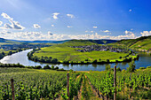 Germany, Europe, travel, Moseltal, Moselle, Trittenheim, Moselle, River, vineyards, agriculture, bend, clouds, Mosel, nature, tourism, village, wine. Germany, Europe, travel, Moseltal, Moselle, Trittenheim, Moselle, River, vineyards, agriculture, bend, cl