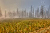 Morning Fog South of Fountain Flat Drive,Yellowstone National Park, Wyoming, USA
