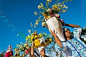 Candomble followers carry religious figurines and flowers during the ritual procession in honor to Yemanjá, the goddess of the sea, in Amoreiras, Bahia, Brazil, 3 February 2012  Yemanjá, originally from the ancient Yoruba mythology, is one of the most pop