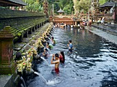 Balinese bath in the sacred waters of Tirta Empul  An ancient natural water spring feeds the baths  This area is believed to be the ancient center of the Subak culture