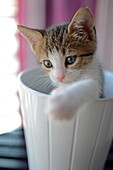 1/2 Months old kitten inside a pottery bowl
