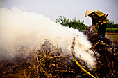 Vietnamese Farmer Burning Old Crops to Prepare for Next Harvest