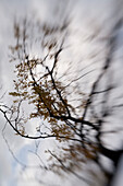 Blurred Branches, Abstract