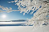 Snow covered branches of a beech tree, Schauinsland, near Freiburg im Breisgau, Black Forest, Baden-Wuerttemberg, Germany