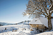 Snow covered yard with a traditional house and a tree, Muggenbrunn, near Todtnau, Black Forest, Baden-Wuerttemberg, Germany
