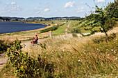 Cycling track along Baltic Sea bay, Seedorf, Island of Ruegen, Mecklenburg-Western Pomerania, Germany