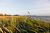 Bucht mit Schilf, Landschaft am Meer,  Ostsee, bei Neu Reddevitz, Insel Rügen, Mecklenburg-Vorpommern, Deutschland