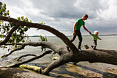 Father and son  balancing over a fallen tree at Baltic Seashore, Muglitz, Island of Ruegen, Mecklenburg-Western Pomerania, Germany