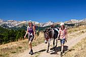 Donkey hiking, Queyras, Hautes-Alpes, Provence-Alpes-Cote d'Azur, France