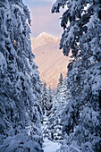 Winter scenic of snow covered spruce trees and Chugach Mountains near Girdwood, Southcentral Alaska
