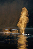 Pair of humpback whales swimming on surface fluke & spouting Inside Passage SE Alaska Summer backlit