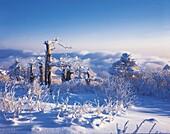 Mt.Taeback