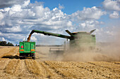 A large combine harvester machinery cutting the ripe arable crop. Dust rising from the cut straw. Grain shute with a flow of grain into a trailer.