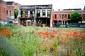 Overgrown Field Of Wildflowers In Urban Setting