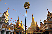 One palm tree with the roofs of the Shwedagon Pagoda, Yangon, Myanmar, Burma, Asia