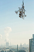 Tree cutting in linz, Transporting trees by helicopter, Linz, Upper Austria, Austria