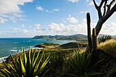 Coastal landscape with cactus, St. Lucia, Windward Islands, Lesser Antilles, Caribbean