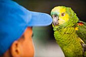 Trusting parrot with young boy, Caribbean