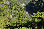 blocked for illustrated books in Germany, Austria, Switzerland: Tree ferns, eroded escarpments and sand clay cliffs of the Whanganui River, North Island, New Zealand