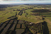 Aerial view of kiwifruit orchards, Actinidia deliciosa, Plantations with hedges as windbreakers, Bay of Plenty, North Island, New Zealand