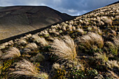 Volcanic terrain, Tongariro Alpine Crossing, Great Walk, Tongariro National Park, World Heritage, North Island, New Zealand