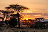 Sunrise in Ruaha National Park, Acacia Trees, Tanzania, East Africa, Africa