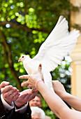 Bridal couple freeing a pigeon, Styria, austria