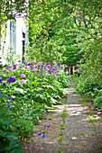 Way to the house with allium in blossom, garden in summer, Vienna, Austria