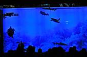Riesiges Salzwasser-Aquarium mit Haien und Schildkröten, Nanjing Donglu-Fußgängerzone, Shanghai, China