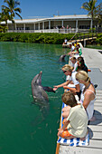 Tourists swimming and playing with dolphins, dolphin show, Hawks Cay Resort, Florida Keys, USA