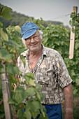 Old smiling man in between grape-wine, portrait while grape harvest, rural Krsko, Dolenjska, Bela Krajina, Slovenia
