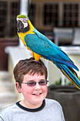 Local parrot Bob from the Jim and Bob Bird show performing with young boy, Key West, Florida Keys, Florida, USA