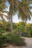 Bicycles for hire at Hotel Resort Casa Morada, Islamorada, Florida Keys, Florida, USA