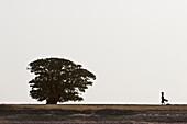 Woman and tree along the shores of the Niger River between Mopti and Lake Débo, Mali