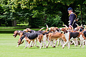 Hunting dogs in the Park of Château de Cheverny, Cheverny, France