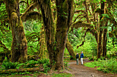 Washington, Olympic National Park, Hoh Rainforest, Hall of Mosses Trail, People along trail admire the giant moss-covered Bigleaf Maple Trees.