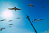 California, Santa Barbara, Seagulls flying overhead.