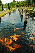 Indonesia, Bali, Karangasem, Tirtagangga Water Palace Gardens, koi fish in pond.