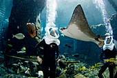 Hawaii, Oahu, Sea Life Park, People experiencing Underwater Sea Trek Adventure.