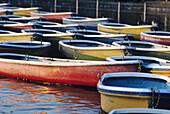 Japan, Tokyo, Ueno Park, colorful row boats tied together on lake.