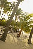 French Polynesia, Tahiti, Bora Bora, hammock tied between palm trees on sandy beach