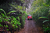 Hawaii, Lanai, Munro Trail on Mt. Lanaihale, with Jeep coming down road through forest