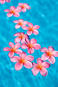Bright pink plumeria's floating in turquoise water.