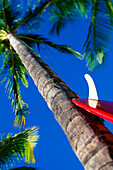 Hawaii, Red surfboard with white skeg leans up against tall palm tree