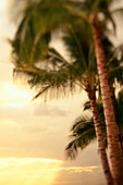 View of sunset beaming through the clouds, row of palm trees on the side