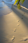 Footprints in sand at water's edge, soft warm golden light